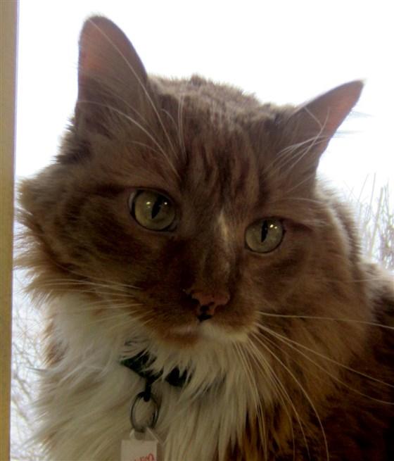 pudding the cat - 6 Aksi Penyelamatan Luar Biasa dari Kucing Heroik di Dunia