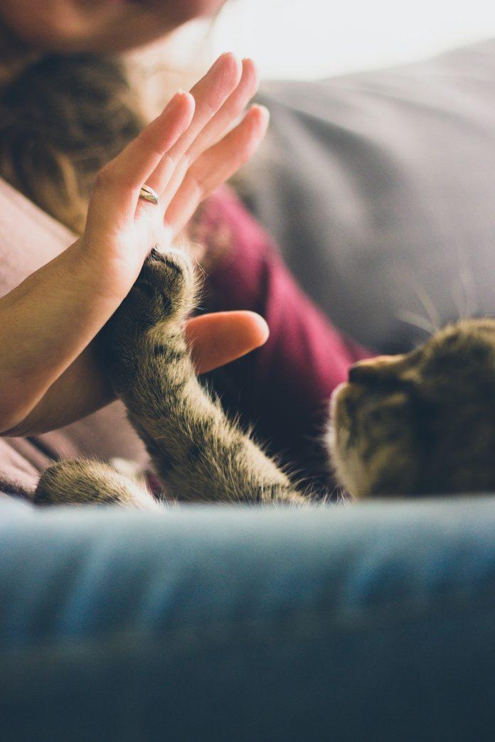 tips kucing manja