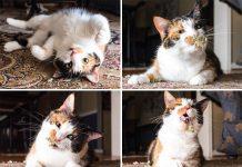kucing mabuk catnip11 218x150 - Beranda