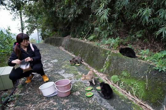 Houtong Cat Village : kawasan bekas tambang yang diubah menjadi perkampungan kucing.