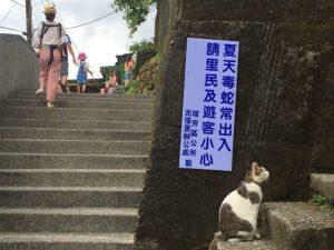 Ada sekita 200 kucing yang tinggal di desa Houtong cat village.