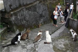 houtong cat village2 300x200 - Houtong Cat Village : Bekas Tambang yang Disulap jadi Perkampungan Kucing
