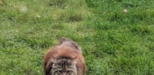 Willow, seekor kucing yang selalu bawakan bunga ke rumah tetangga barunya.
