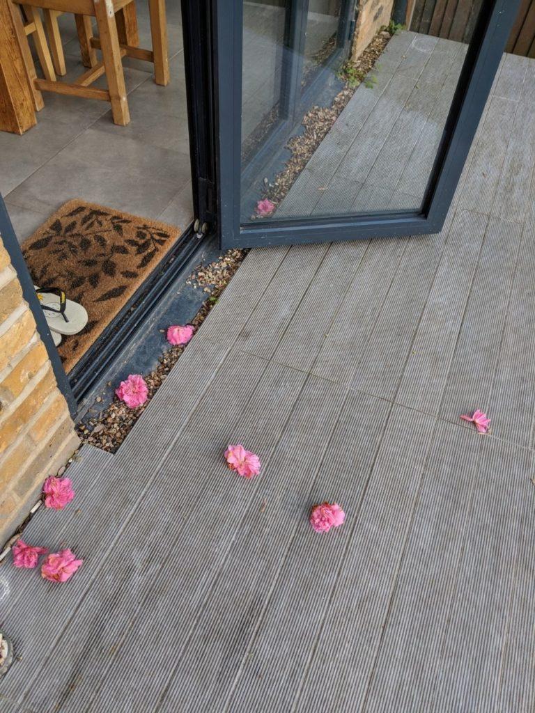kucing bawa bunga ke tetangga2 768x1024 - Kucing ini Selalu Bawakan Bunga ke Rumah Tetangga Barunya, So Sweet !