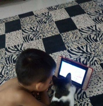 Jangan ajari kucing mai gadget. Pokoknya jangan !!