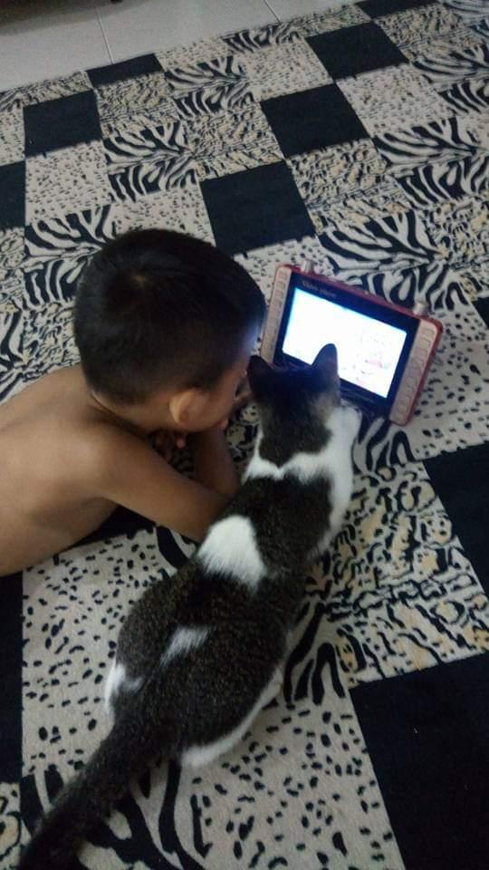 Jangan ajari kucing main gadget. Pokoknya jangan !!